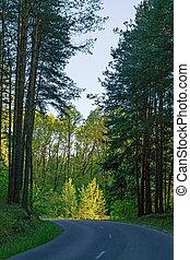 Asphalt road through the forest.
