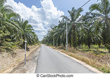 Asphalt road through the oil palm plantation and clouds on blue sky