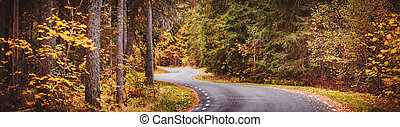 Asphalt road with beautiful trees on the sides in autumn forest