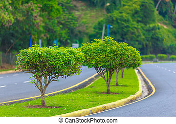 asphalt road with trees