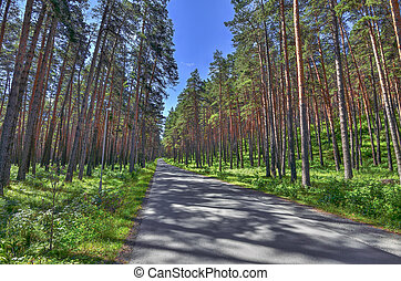Asphalt Walkway in pine grove at bright summer day, forest coolness