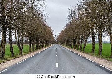 Asphalt wavy road in autumn misty countryside landscape