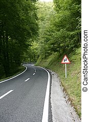 Asphalt winding curve road in a beech forest