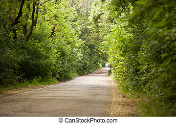 Asphalt winding  road in a beech green forest