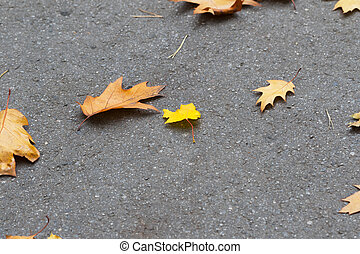 Asphalt with autumn dry oak and maple leaves