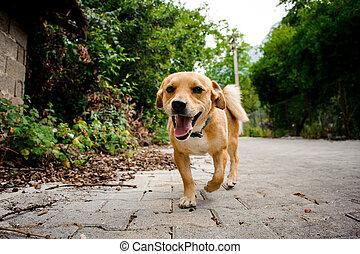asphalte, couleur, chien domestique, gingembre, sentier