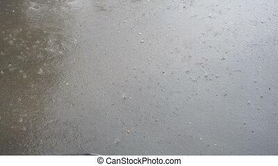 asphalte, coup, pluie chute, large