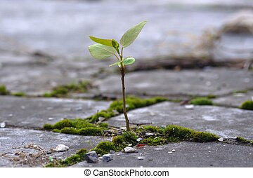 Aspiration - seedling in the stones