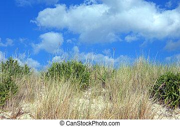 Assateague Island Sand Dunes