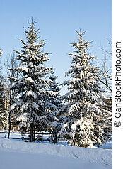 asseado, coberto, árvores inverno, neve