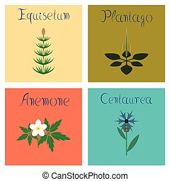 assembly flat Illustrations Plantago Anemone Centaurea...