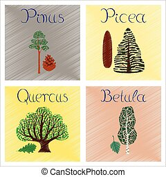 assembly flat shading style Illustrations Pinus Picea Quercus Betula