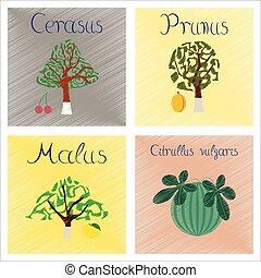 assembly flat shading style Illustrations Citrullus Malus Prunus Cerasus