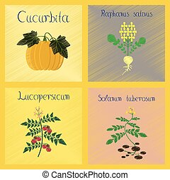 assembly flat shading style Illustrations Cucurbita raphanus tomato Solanum