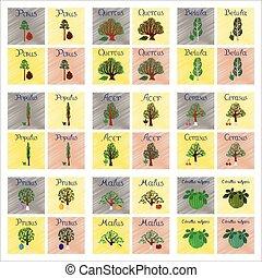 assembly flat shading style Illustrations Pinus Picea Quercus Betula Citrullus Malus Prunus Cerasus Citrullus Populus