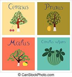 assembly of flat Illustrations Citrullus Malus Prunus Cerasus