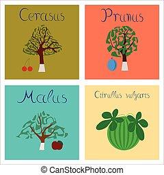 assembly of flat Illustrations Citrullus Malus Prunus...