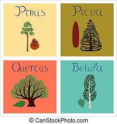 assembly of flat Illustrations Pinus Picea Quercus Betula