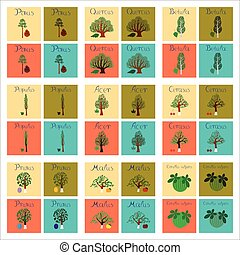 assembly of flat Illustrations Pinus Picea Quercus Betula Citrullus Malus Prunus Cerasus Citrullus Populus