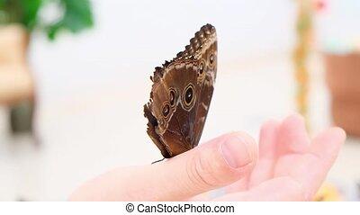 assied, close-up., brun, grand, papillon, main., mâle