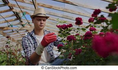 assied, vente, fleuriste, roses, examine, mâle, développé,...