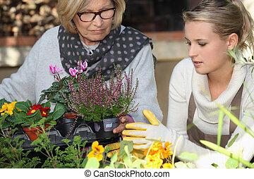 assistência, para, pessoas anciãs