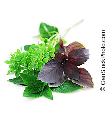 Assorted basil herbs - Various types of basil herb on white...