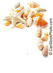assorted beach shells in a border, on white