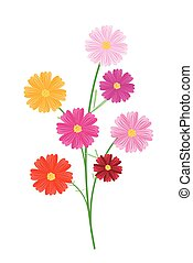 Assorted Cosmos Flowers on A White Background