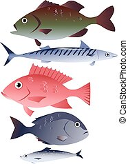 Popular species of commercially harvested fish, including bass, mackerel, snapper, tilapia and herring, EPS 8 vector illustration, no transparencies, isolated on white
