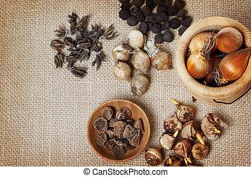 Assorted flower bulbs (crocus, anemone, grape hyacinth,...