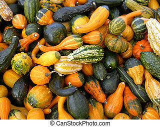 a pile of assorted gourds shot from above