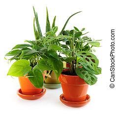 Assorted houseplants - Assorted green houseplants in pots ...