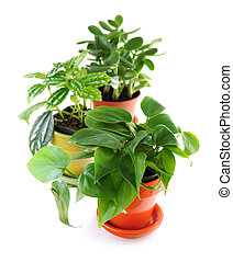 Assorted houseplants