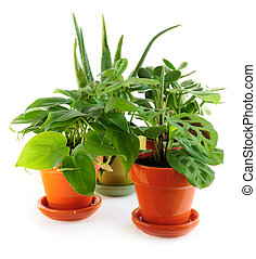 Assorted houseplants - Assorted green houseplants in pots...