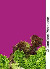 assorted lettuce