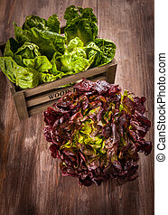 Assorted lettuce on wooden table