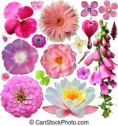 Assorted of colorful blooms