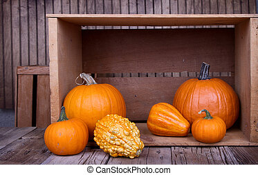Assorted pumpkins and gourds