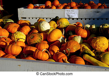Assorted Pumpkins