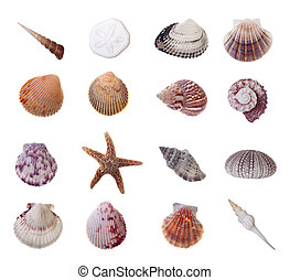 Assorted Seashells Isolated on White