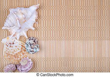 Assorted seashells on bamboo background