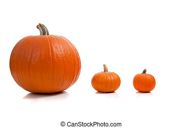 Assorted sizes of pumpkins on a white background