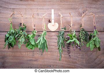 assortito, appendere, erbe, , basilico, basilico, e, timo, per, condimento, concetto, su, rustico, vecchio, legno, fondo.