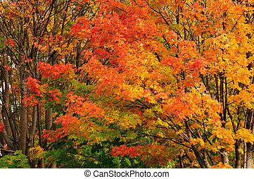 assortito, colori, di, natura