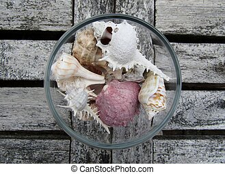 Assortment of beautiful shells in an empty cognac brandy glass
