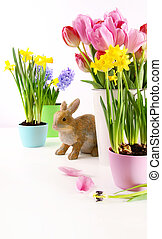 Assortment of colorful spring flowers for Easter