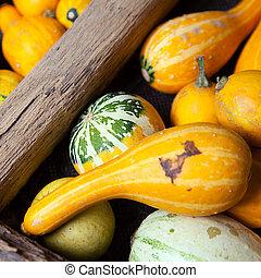 Assortment of different decorated pumpkins