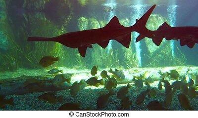 Assortment of Fascinating Fish in a Public Aquarium. Video -...