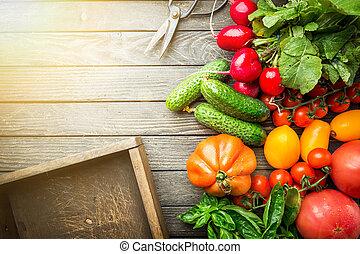 Assortment of organic vegetables